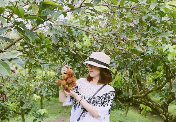 Du khách đến du lịch được hái trái cây thỏa thích