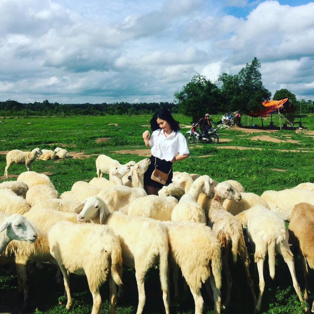 Chụp ảnh cùng đàn cừu