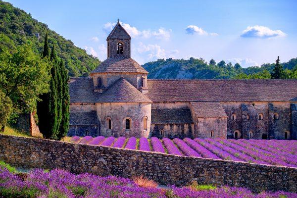 Cánh đồng hoa oải hương ở Pháp