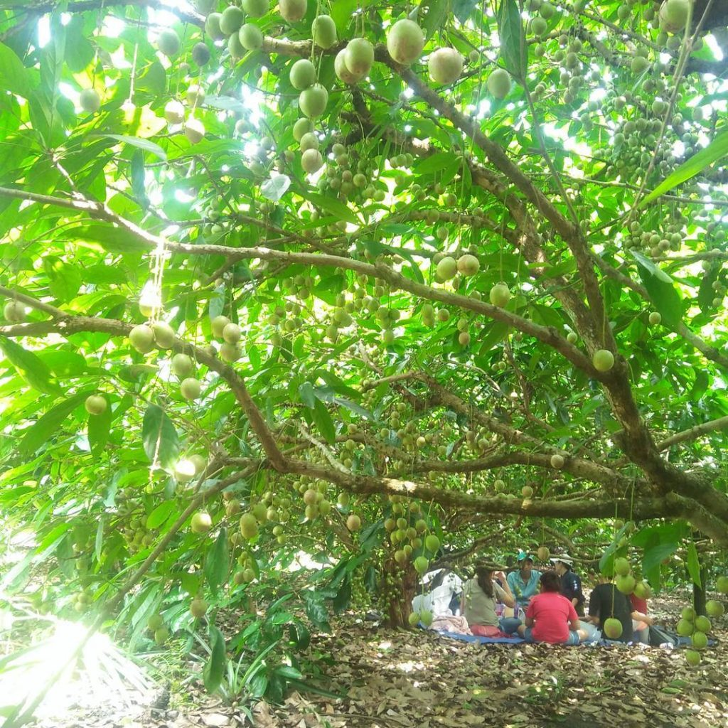 Vườn trái cây Trung An - ảnh 2