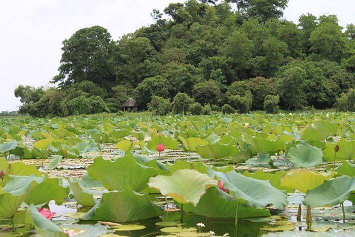 Hồ Quan Sơn vào mùa sen nở